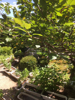庭園の緑の植物の写真・画像素材[732408]