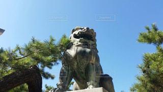 木の像の写真・画像素材[1106384]