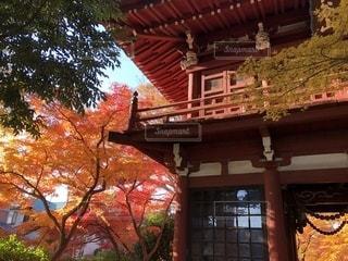 自然,秋,紅葉,千葉県,モミジ,本土寺,松戸市,北小金駅,12月撮影