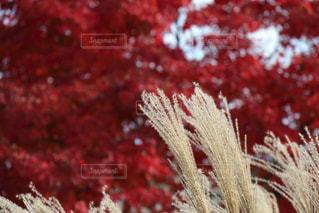 近くの植物のアップの写真・画像素材[872009]