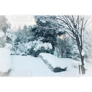 冬,木,雪,屋外,白,雪景色,景色,ホワイト,スノーホワイト,スノー