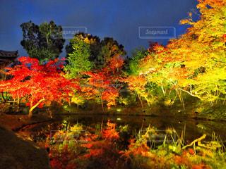 木々 に囲まれた水の体の写真・画像素材[878550]