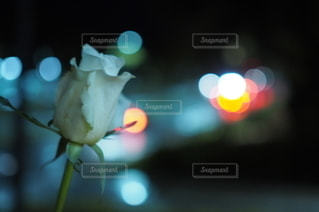 花の写真・画像素材[2622823]