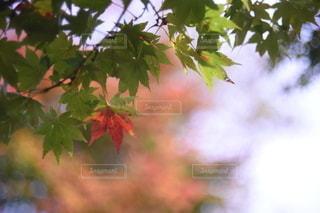 自然の写真・画像素材[2653961]
