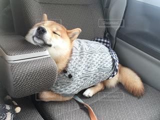車の座席に座っている犬の写真・画像素材[973370]