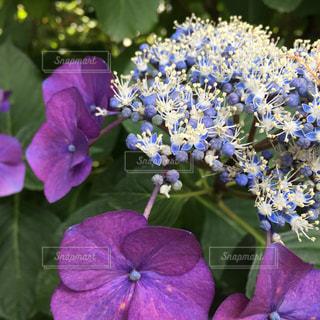 近くに紫の花のアップの写真・画像素材[1238864]