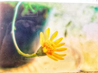 近くの花のアップの写真・画像素材[1368245]