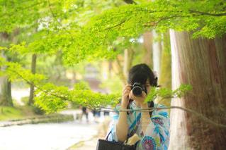 京都の写真・画像素材[662547]