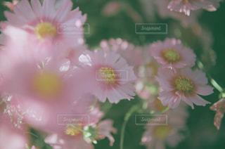 近くの花のアップ - No.712943