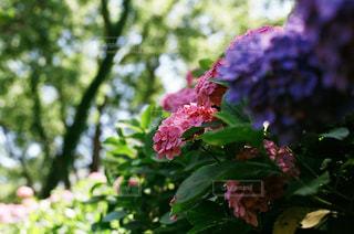 近くの花のアップ - No.712957