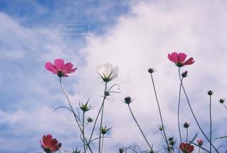 植物にピンクの花 - No.712990