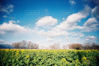 フィールド内の黄色の花 - No.712991