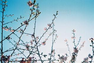 青空と春の写真・画像素材[713102]