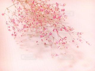 近くの花のアップ - No.873675