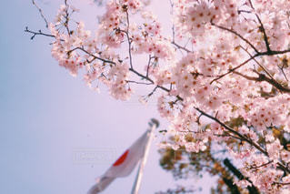 近くの木のアップの写真・画像素材[873686]