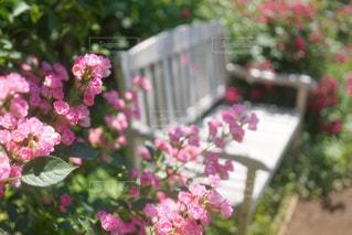 植物にピンクの花 - No.873693