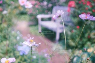 植物にピンクの花 - No.877441