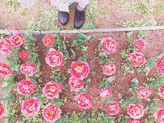 色とりどりの花のグループの写真・画像素材[877444]