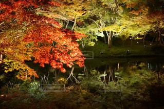 フィールドの真ん中の木の写真・画像素材[877602]