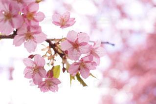 近くの花のアップの写真・画像素材[877936]