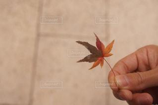 花を持っている手の写真・画像素材[880112]
