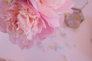 近くの花のアップの写真・画像素材[886660]