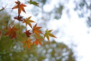 木の枝に花の花瓶の写真・画像素材[886740]