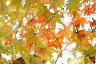 植物の木の成長の写真・画像素材[886741]