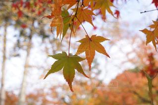 木の枝にピンク色の花のグループの写真・画像素材[886743]