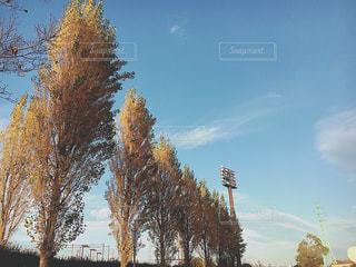 近くの木のアップの写真・画像素材[890178]