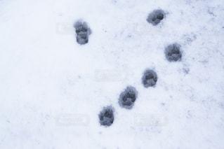 雪に覆われた鉄道 - No.908932