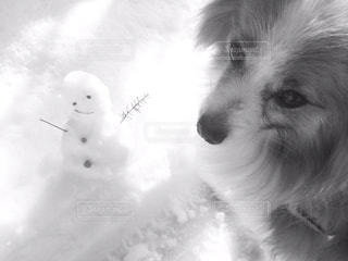 カメラを見て犬の写真・画像素材[908957]