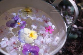 近くの花のアップの写真・画像素材[915277]
