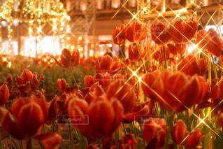 近くの花のアップ - No.918037