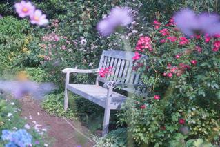 近くのフラワー ガーデンの写真・画像素材[918604]