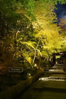 森を流れる川の写真・画像素材[929683]