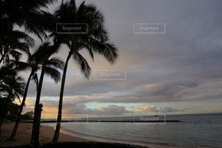 水の体の近くのビーチにヤシの木の写真・画像素材[957073]