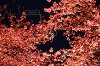 暗い部屋でツリーの写真・画像素材[1137170]