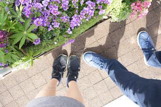 歩道の上の紫の花のグループの写真・画像素材[1157771]