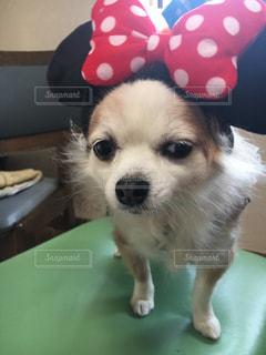 帽子をかぶった犬 - No.1184311