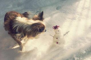 近くに犬のアップ - No.1186095