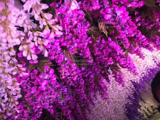 近くの花のアップの写真・画像素材[1445817]