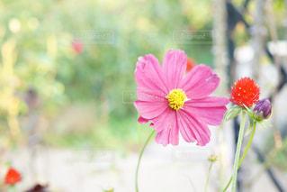 近くの花のアップの写真・画像素材[1466293]