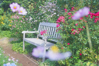 近くのフラワー ガーデンの写真・画像素材[1565513]