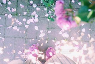 ピンクの花のグループの写真・画像素材[1799425]