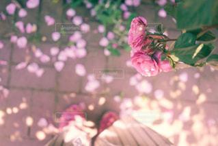 植物にピンクの花の写真・画像素材[1799427]