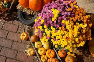 花,秋,黄色,ハロウィン,かぼちゃ,イエロー