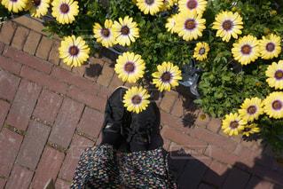 花,散歩,黄色,ガーデニング,イエロー,スニーカー,元気が出る色