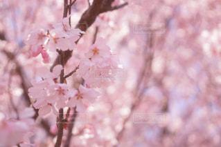 近くの花のアップの写真・画像素材[1832027]