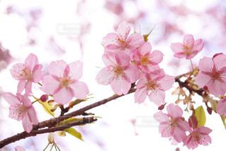 近くの花のアップの写真・画像素材[1832032]